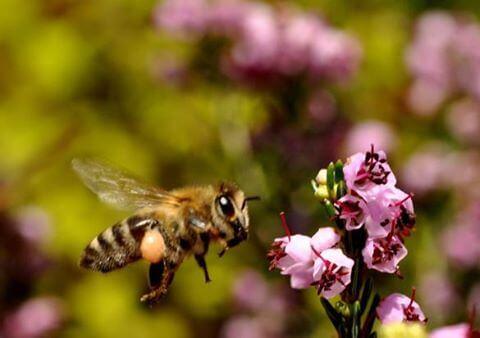 Heather Premium Honey (2)
